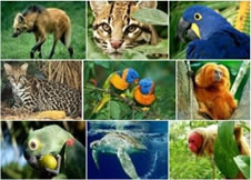 Laudo de Fauna Silvestre