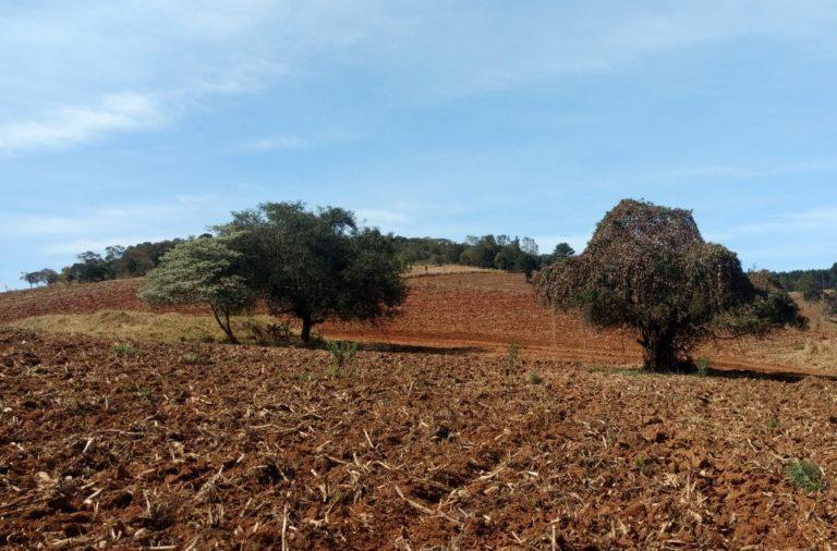 Levantamento de Árvores Isoladas